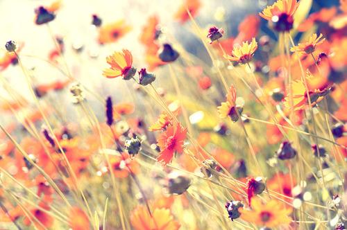 flowers-grass-nature-photography-plants-pretty-Favim.com-55172_large